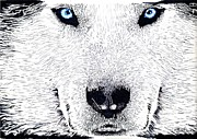 Husky Drawings Metal Prints - Siberian Husky  Metal Print by Bill Richards
