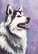 Siberian Husky Paintings - Siberian Husky by Darlene Fletcher