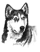 Barbara Lightner - Siberian Husky Dog