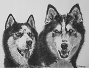Husky Drawings Metal Prints - Siberian Husky Dogs Sketched in Charcoal Metal Print by Kate Sumners