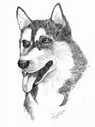 Husky Drawings Metal Prints - Siberian Husky Metal Print by Tricia Griffith
