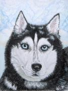 Husky Drawings Metal Prints - Siberian Husky Metal Print by Yvonne Johnstone