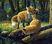 Fox Painting Prints - Sibling Rivalry Print by Crista Forest