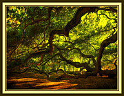 Light And Shadows Framed Prints - Side Limbs of the 1400 Year Old Angel Oak Framed Print by Susanne Van Hulst