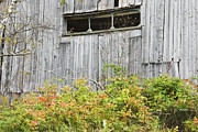 Side Of Barn In Fall Print by Keith Webber Jr