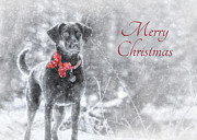 Dogs Digital Art Metal Prints - Sienna - Merry Christmas Metal Print by Lori Deiter