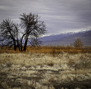 Photographic Art For Sale Photos - Sierra Nevadas by Richard Smukler
