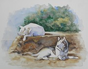 Huskies Painting Posters - Siesta time Poster by Suzanne Schaefer