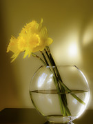 Daffodils Posters - Sign of Spring Poster by Julie Palencia
