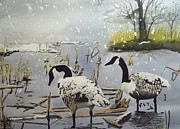 Canadian Geese Paintings - Signs for Departure by Charlie Brown