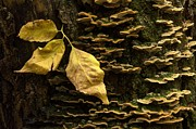 Fungi Photos - Signs Of Autumn by Bob Christopher