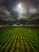 Crops Art - Signs of Life by Phil Koch