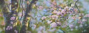 Cherry Blossoms Drawings Metal Prints - Signs of Spring Metal Print by Michael Ashmen