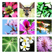 Bromeliad Posters - Signs of Spring - Season Art Poster by Sharon Cummings