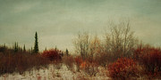 Moody Photos - Signs Of Winter by Priska Wettstein