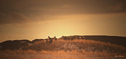 Alberta Prairie Landscape Prints - Silence At Sunset Print by Laura Bentley