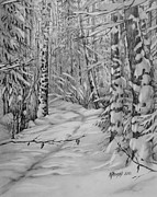 Fir Trees Drawings - silence in Russian by Khromykh Natalia