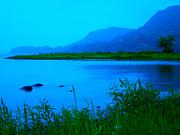 Ginny Gaura - Silence of Nature