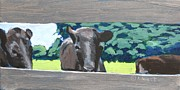 Black Angus Prints - Silence of the Cows Print by Katrina West