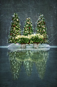 Christmas Tree Photos - Silent Night by Evelina Kremsdorf