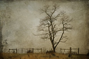 Gate Prints Prints - Silent Solitude Print by Kathy Jennings