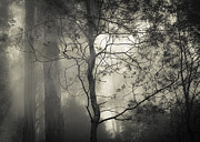 Fog Mist Posters - Silent Stirring Poster by Amy Weiss