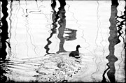 Dan Friend - silhouette duck in water with reflections