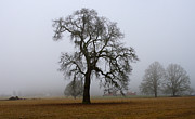 Harold Greer Metal Prints - Silhouette In Fog Metal Print by Harold Greer