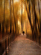 Walkway Digital Art - Silhouette in Solitude by Jessica Jenney