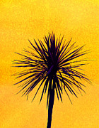 Cordyline Tree Prints - Silhouette On Gold Print by Margaret Saheed