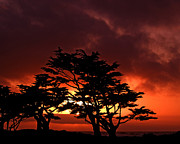 Backlit Photo Prints - Silhouetted Cypresses Print by Bill Gallagher