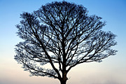 Dusky Prints - Silhouetted Tree Print by Craig Brown