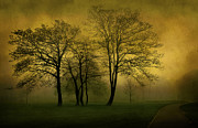 Mystery Digital Art - Silhouetted Trees by Svetlana Sewell
