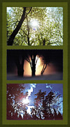 Lamps Mixed Media Posters - Silhouetted Trees Triptych Poster by Steve Ohlsen