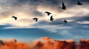 Geese Prints - Silhouettes Print by Jeff S PhotoArt
