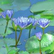 Water Lily Leaves Framed Prints - Silken Lilies Framed Print by Holly Kempe