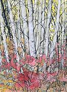 Silver Birch Print by Joey Nash