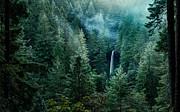 Brian Bonham - Silver Falls State Park