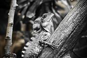 Marilyn Hunt - Silver Lizard