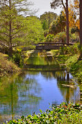 Riverscapes Posters - Silver Springs Florida Poster by Christine Till