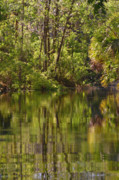 Water Reflections Prints - Silver Springs Nature Park Florida Print by Christine Till