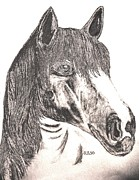 Horse Drawings Digital Art Prints - Silverboy Print by Maria Urso