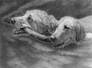 Retrievers Drawings - Simon and Koda by Alison Brush