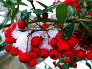 Lisa Jones - Simple Winter Berries