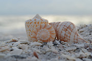 Seashells Photos - Simplicity and Solitude by Melanie Moraga