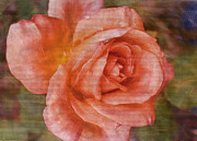 Leaflets Prints - Simply a Rose Print by Deborah Benoit