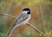 Chickadee Greeting Cards Framed Prints - Simply Chickadee II Framed Print by Debbie Portwood