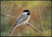 Chickadee Greeting Cards Framed Prints - Simply Chickadee III Framed Print by Debbie Portwood