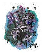 Signed Drawings Prints - Simply Iris-sistable Print by Amanda  Sanford