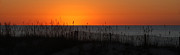 Beach Fence Digital Art Posters - Simply Orange Poster by Michael Thomas